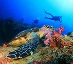mombasa scuba diving
