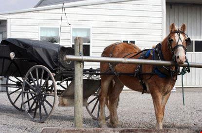 fort wayne carretto con cavallo