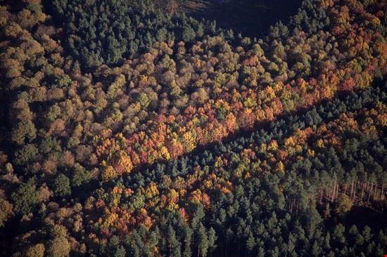 nottingham foresta di sherwood
