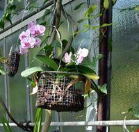 109132 orto botanico hanbury dell universita di genova genova