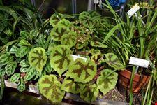 orto botanico horto botanico hanbury dell universita di genova genova