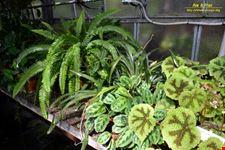 orto botanico hanbury dell universita di genova genova