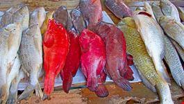 pesce mozambico