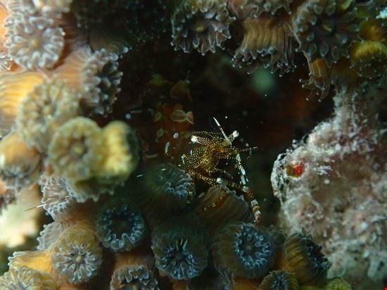 key west key west barriera corallina