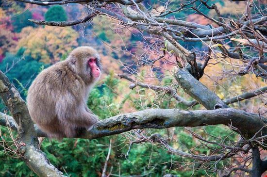 kyoto monkey park arashiyama