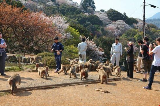 kyoto iwatayama monkey park