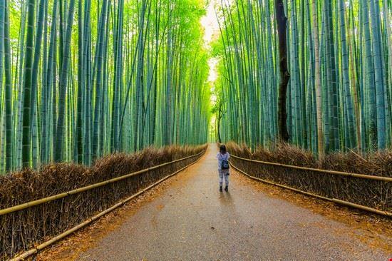 Bosco Di Bamb.Bosco Di Bambu A Kyoto