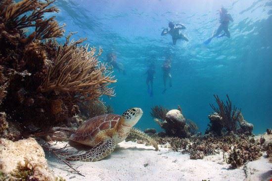 110383 akumal snorkeling