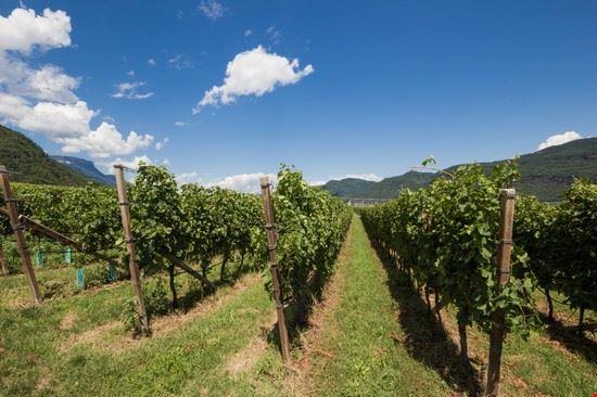 111863 termeno sulla strada del vino vigneti