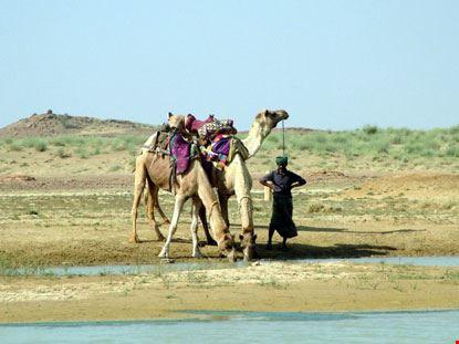 jaisalmer camelliere
