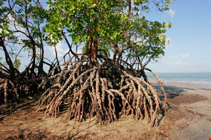 vilanculos mangrovie