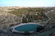 Irrigation basket