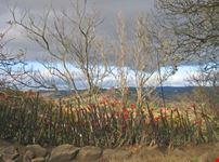 antananarivo countryside