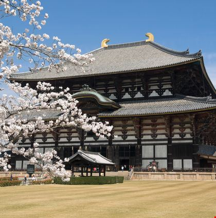 Todai-ji temple with cherry blossoms