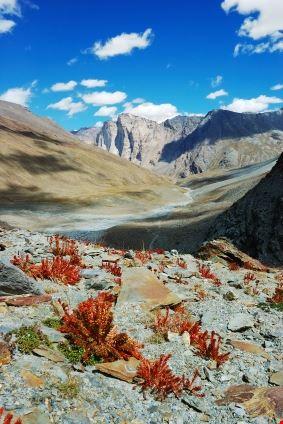 Himalayan Scenic