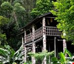 Longhouse in the Jungle