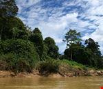 Riverbank Jungle