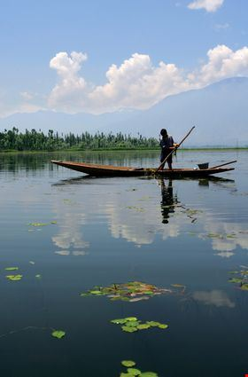 A young boy in Kashmir collecting grass off the bottom of a lake