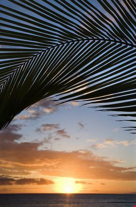 Sunset sky framed by palm fronds over the Pacific Ocean