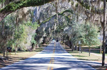 Eerie Spanish Moss-Laden Trees on a Canopied Road