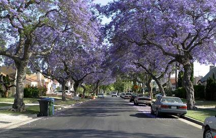 Wonderful American Street