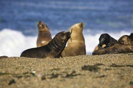 Seals at the beach