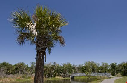 View of Palm Tree at Chain of Lakes Park