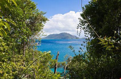 Island view through the jungle