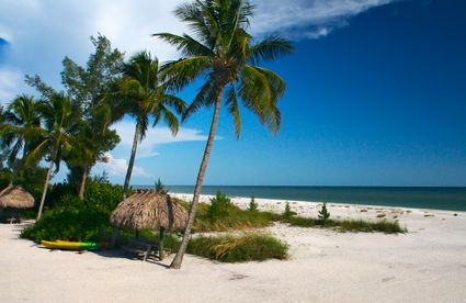 Photo Tropical Beach Setting In Sanibel Pictures And