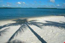 Palm shadow on sand