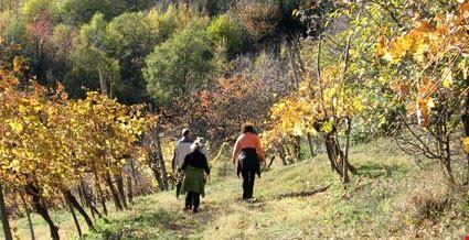 Camminata tra le vigne