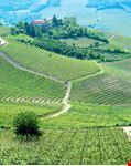 Vigne del Piemonte