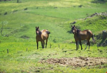 Cavalli a Valbona