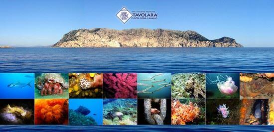15332 san teodoro area marina protetta di tavolara