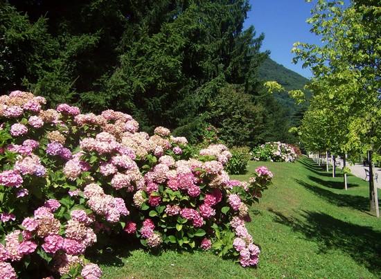 Foto uno scorcio del giardino segreto a casalzuigno 550x403 autore stefano santambrogio - Il giardino segreto pdf ...