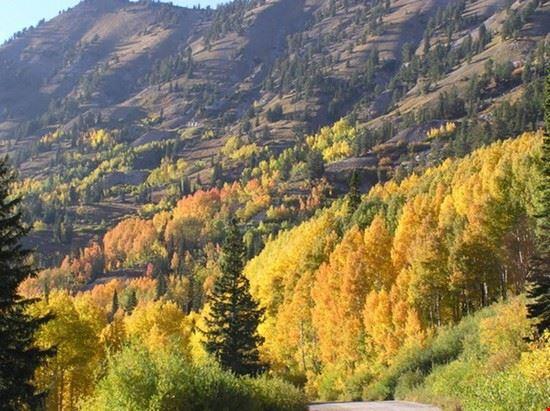 foliage d'autunno