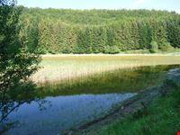 Foresta biogenetica Abetone