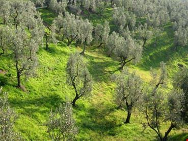 Assaggeremo l'eccellente olio d'oliva da diversi produttori