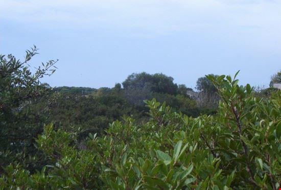 Parco Regionale Litorale di Ugento foto1