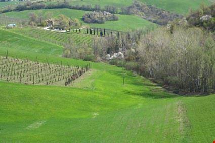 17536_bologna_camminata_tra_campi_e_calanchi_nei_dintorni_di_castello_di