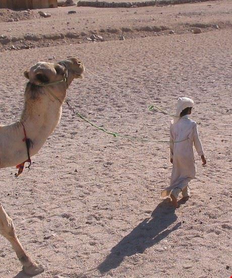 bimbo con il suo cammello