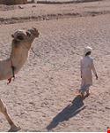 hurgada bimbo con il suo cammello