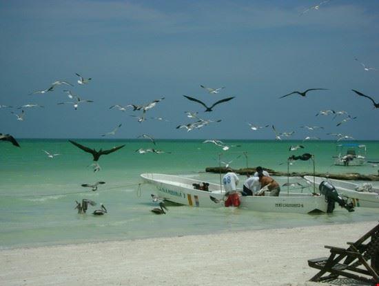 18019 cancun spiaggia holbox