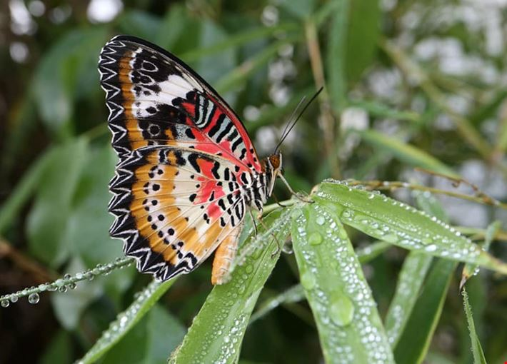 Una delle farfalle ospitata nella casa delle farfalle di palermo
