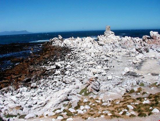 18352 citta del capo pinguini a stony point