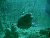 valencia mammiferi marini