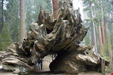 sequoia national park il piu grande tronco del mondo