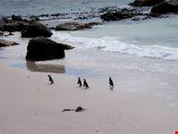 citta del capo boulders beach