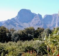 stellenbosch winelands
