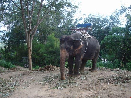 18932 phuket elefante